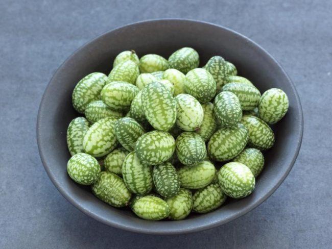 Мелкие плоды мелотрии шершавой из семейства тыквенных растений