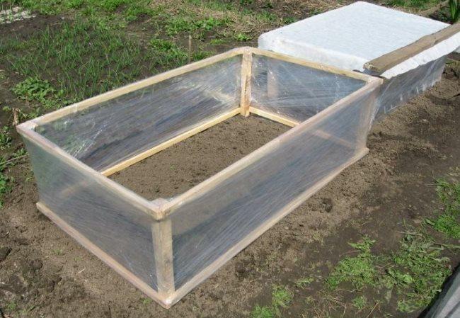 Мини-парник из пленки для укрытия петунии при низкой температуре окружающего воздуха
