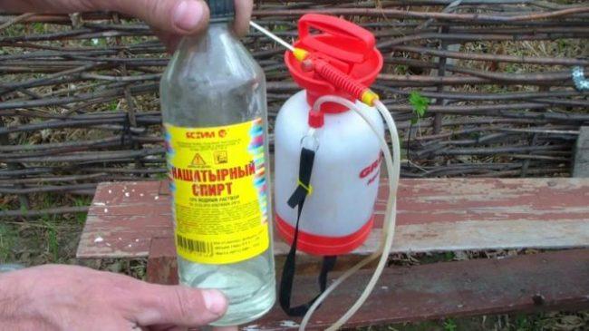 Нашатырный спирт в стеклянной бутылке для уничтожения тли в огороде