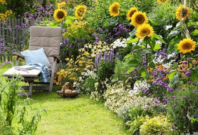 Декоративные подсолнухи в глубине сада загородного участка