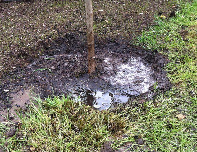 Полив приствольного круга вишни дождевой водой из бочки