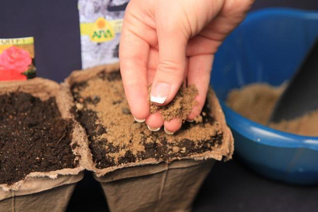 Перетирание семян укропа с речным песком перед посадкой в грунт