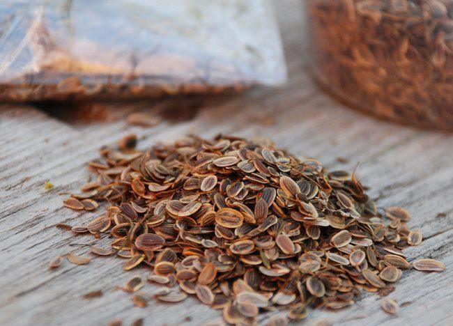 Горка семян укропа на деревянной столешнице балконного столика