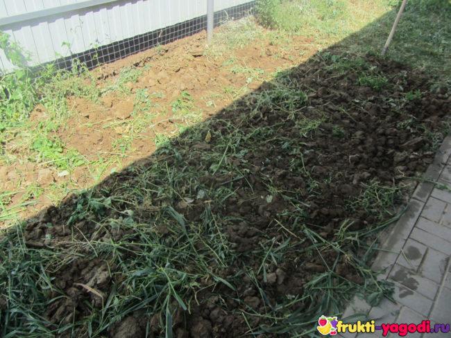 Перекопанные сидераты на садовом участке