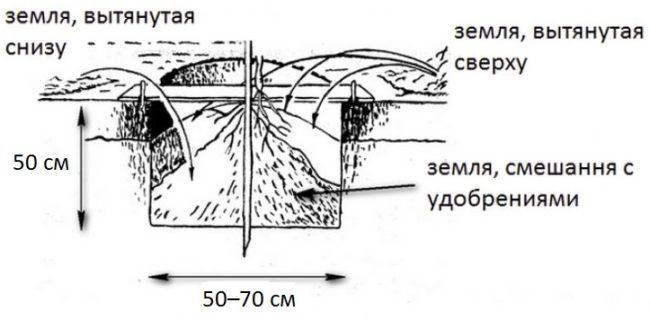 Схема посадочной ямы для вишневого саженца с размерами