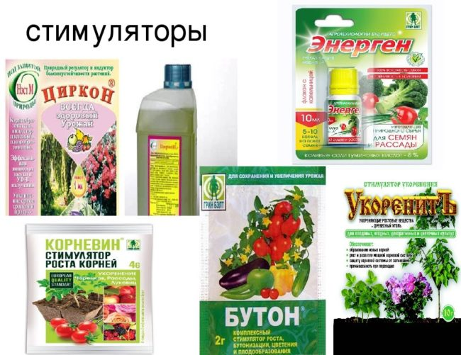Разновидности биологически активных стимулятор роста для растений