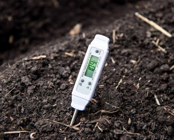 Измерение температуры почвы перед посадкой семян подсолнуха