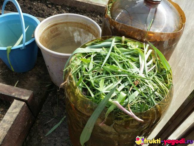 Заготовка в большой ёмкости из под пива (кега) для брожения травы удобрения натуральное