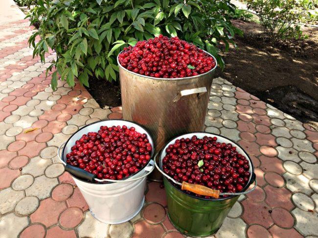 Эмалированные ведра и бак из нержавейки с ягодой венгерской вишни
