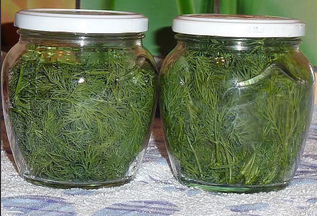 Стеклянные банки с зеленым укропом для хранения в домашних условиях