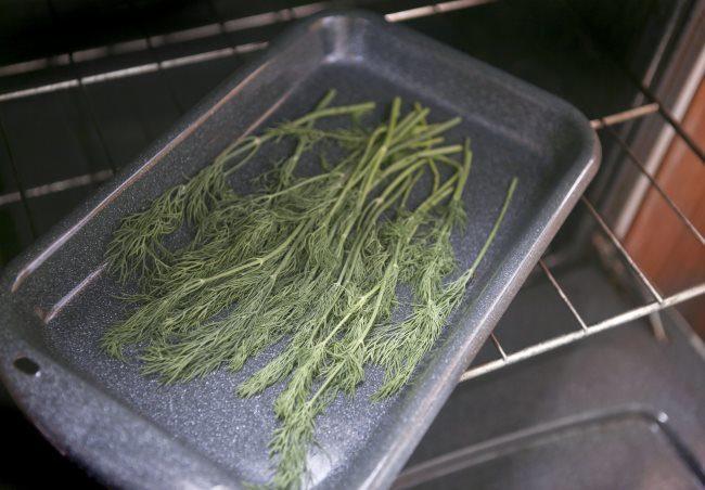 Сушка зеленого укропа на зиму в духовке в домашних условиях