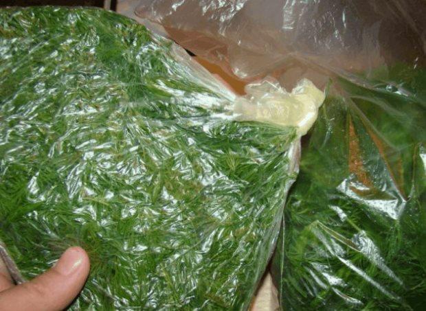 Зеленый укроп в полиэтиленовом пакете через неделю после хранения в холодильнике
