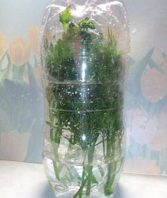 Самодельный контейнер из бутылок для хранения укропа в холодильнике