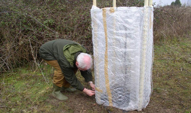 Укрытие кустика вишни на зиму белым материалом на деревянном каркасе