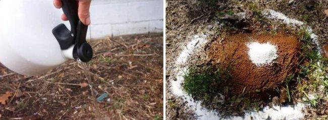 Основные способы борьбы с садовыми муравьями на загородном участке