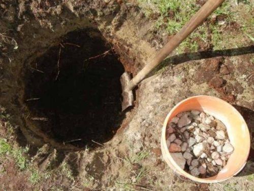 Ведро с камнем для устройства дренажного слоя в посадочной яме