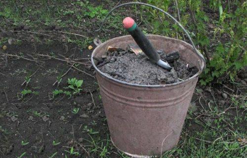 Оцинкованное ведро с древесной золой для подкормки плодовых деревьев