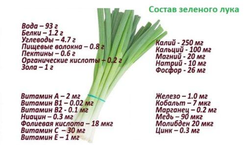 Содержание питательных элементов и витаминов в зеленом луке