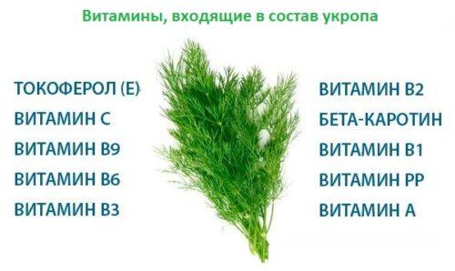 Список витаминов входящих в состав обычного укропа с огорода