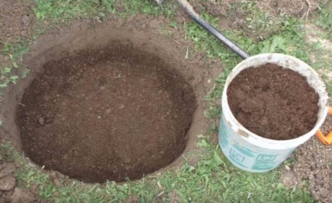 Перегной в посадочной яме для трехлетнего саженца вишни
