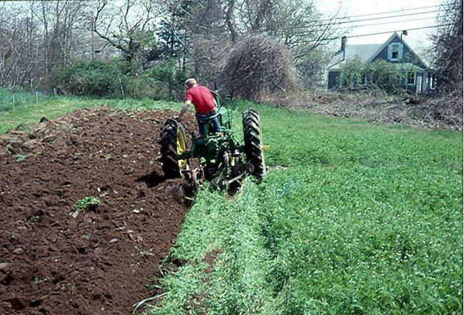 Запахивание трактором зеленой массы сидератов на картофельном поле