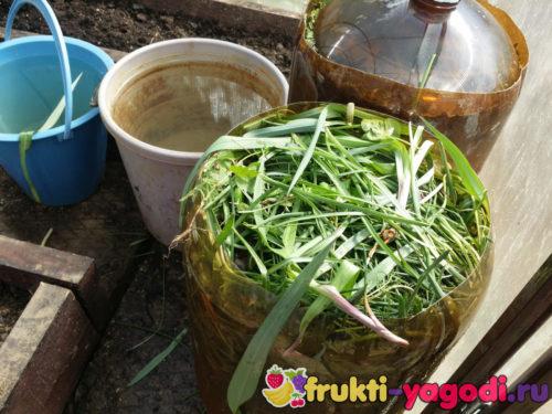 Подготовка удобрения для огурцов в теплице сероводовд