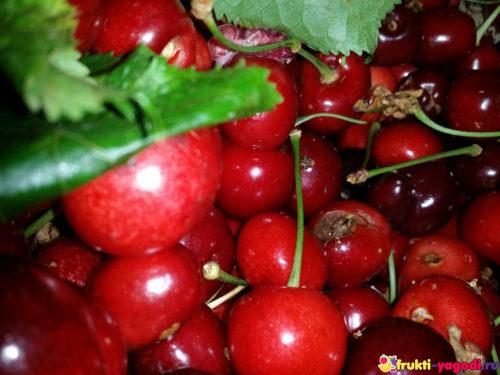 Урожай красной черешни вблизи 2019 года