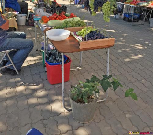 Торгуем помидорами на стихийном базаре