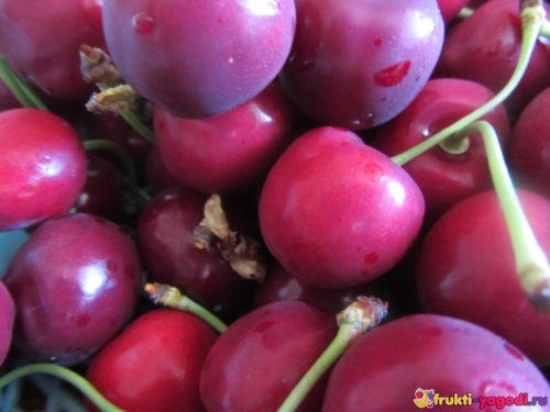 Спелые плоды черешни вблизи