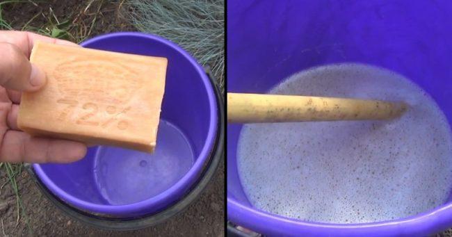 Подготовка мыльного раствора для опрыскивания в ведре