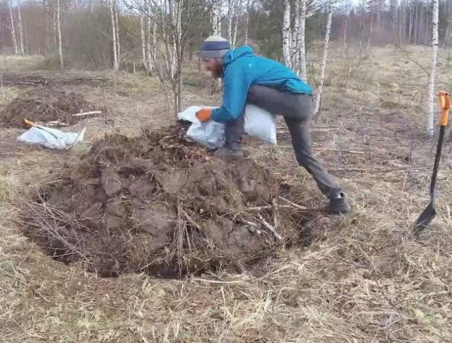 Посадка саженца вишни осенью на насыпной холмик в болотистой местности