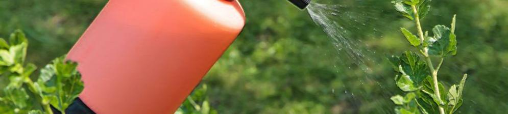 Опрыскивание кустов смородины верхушка из пульверизатора