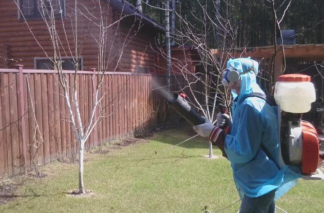 Профессиональная обработка вишневого сада от вредителей и болезней
