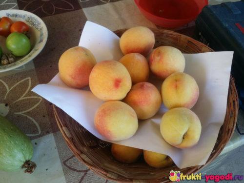 Плоды урожая 2019 года персик лежат на столе