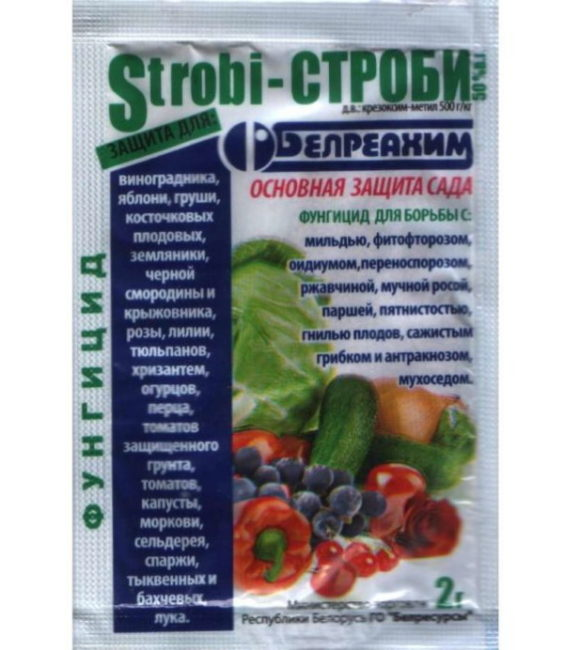 Препарат Строби белорусского производства для борьбы с пятнистостью красной смородины