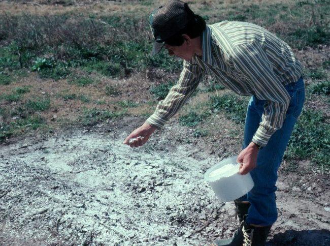 Раскисление участка для посадки вишни с помощью внесения доломитовой муки