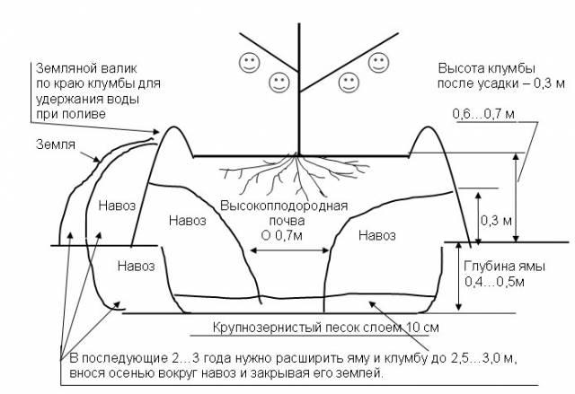 Подробная схема посадки вишни на искусственно насыпанный холмик