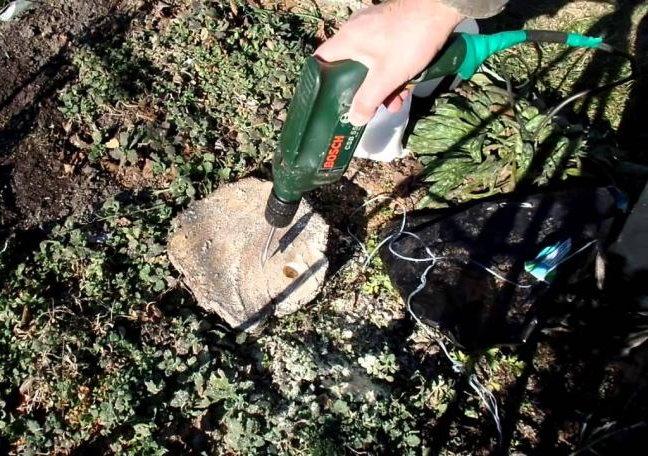 Сверление отверстий в пеньке вишни для удаления без корчевания