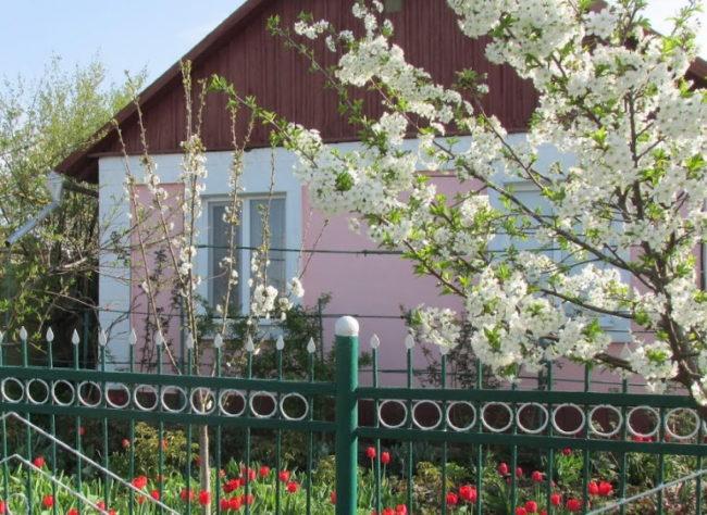 Металлический забор палисадника на участке с цветущей вишней