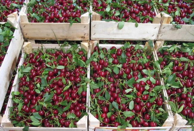 Спелые плоды вишни в деревянных ящиках для продажи на рынке