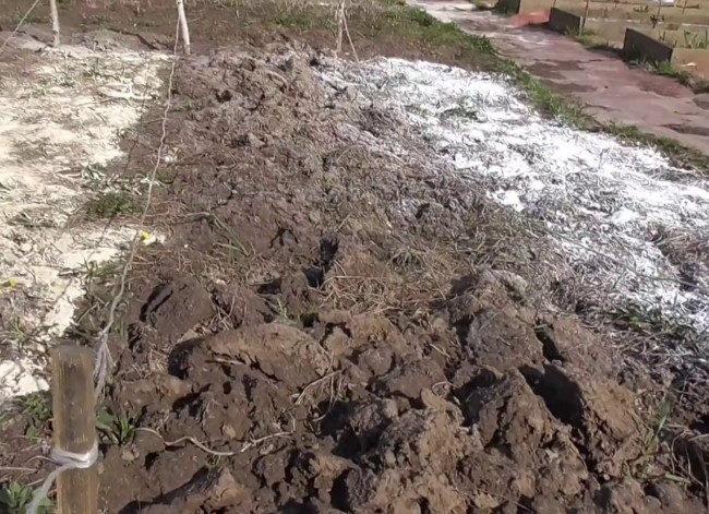 Перекопка участка под вишневый сад с внесением доломитовой муки