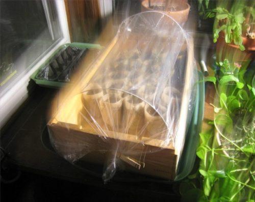 Деревянный ящик для черенкования вишни в домашних условиях