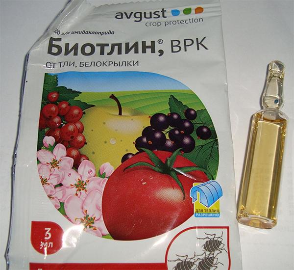 Химический препарат Биотлин для уничтожения тли и белокрылки на кустах смородины