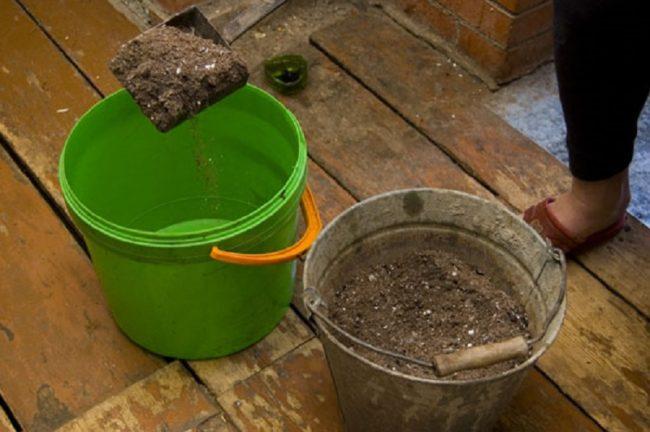 Приготовление раствора золы для подкормки смородины во время плодоношения