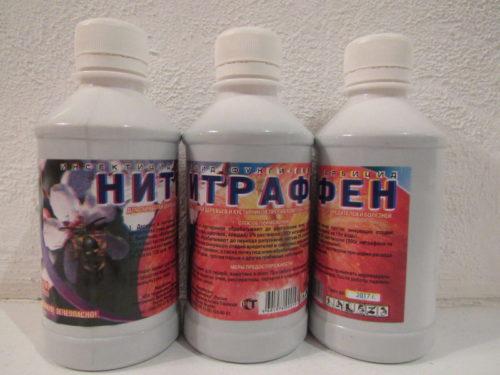 Препарат Нитрофен для обработки смородины после распускания почек