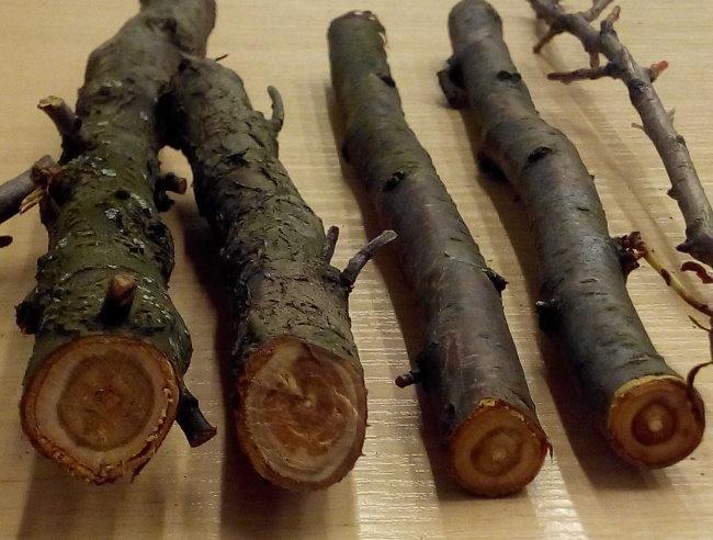 Срезы веток вишни при подмерзании в зимний период
