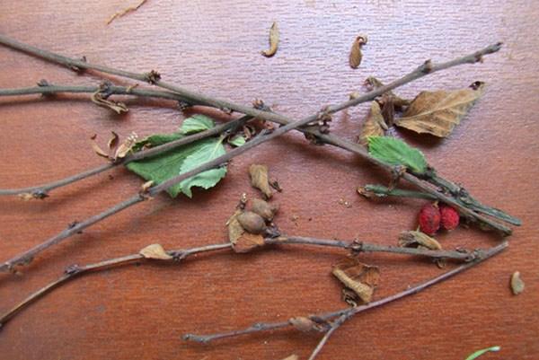 Сухие ветки вишни с нераспустившимися после зимы почками