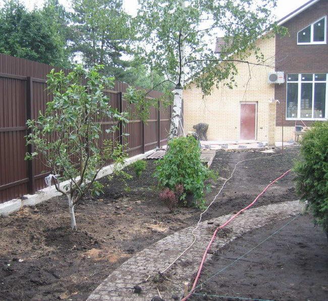 Выращивание вишни около забора из профилированного листа