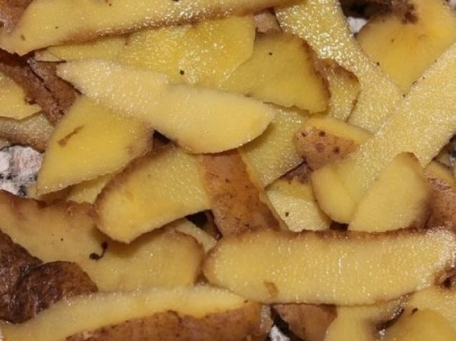 Картофельные очистки для летней подкормки черной и красной смородины