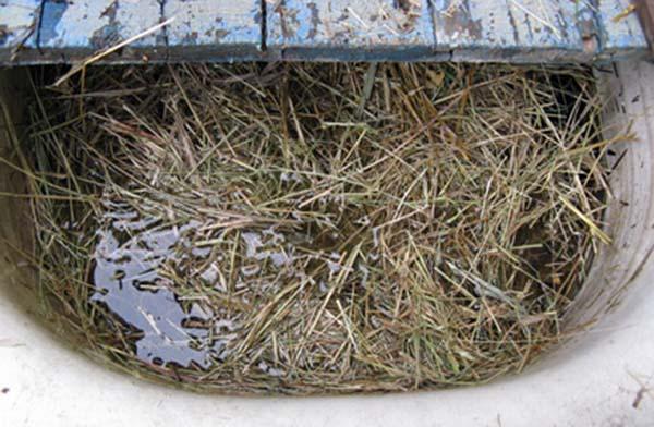Настой прелого сена в качестве народного средства для подкормки смородины